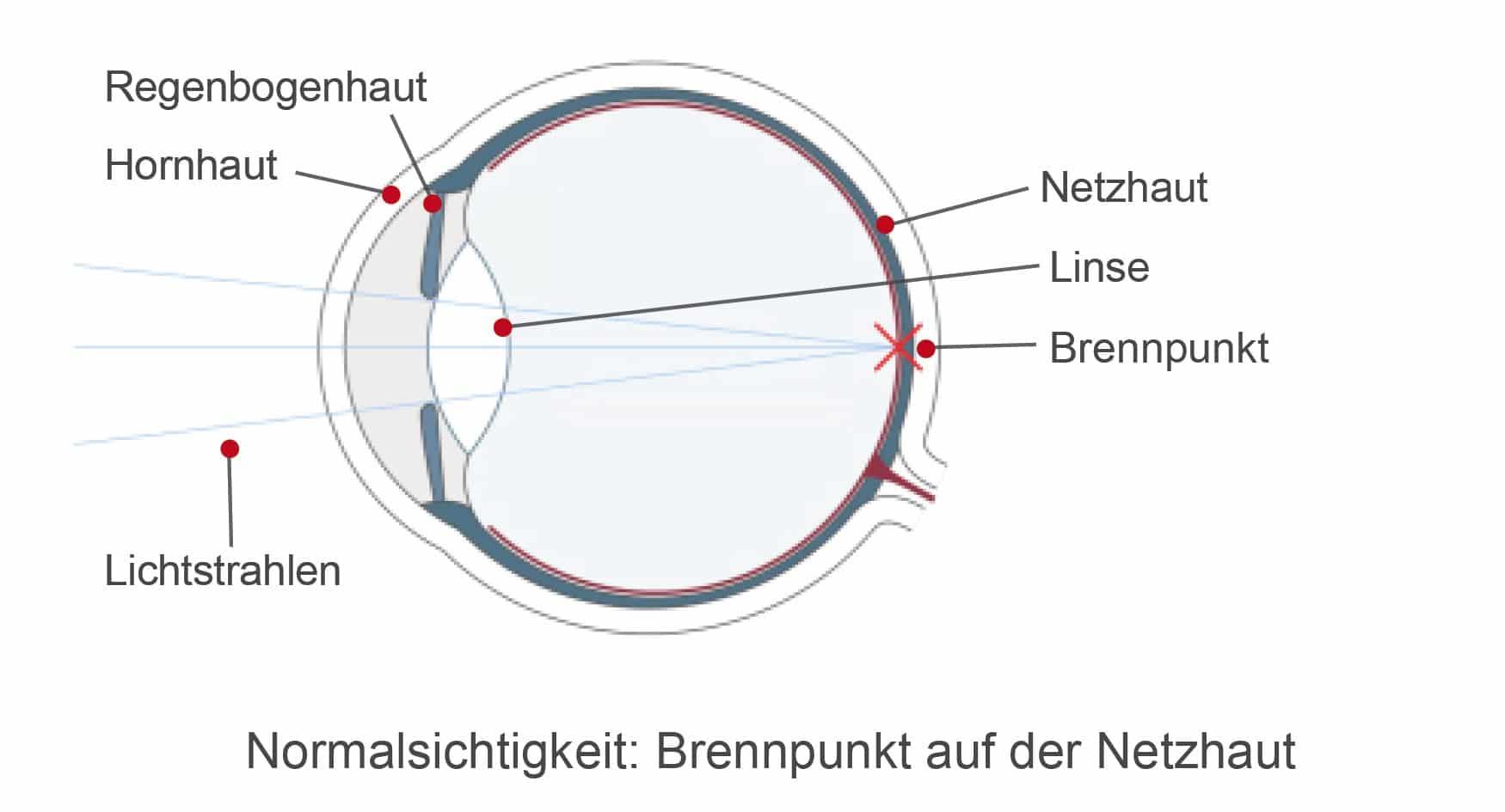 Das normalsichtige Auge